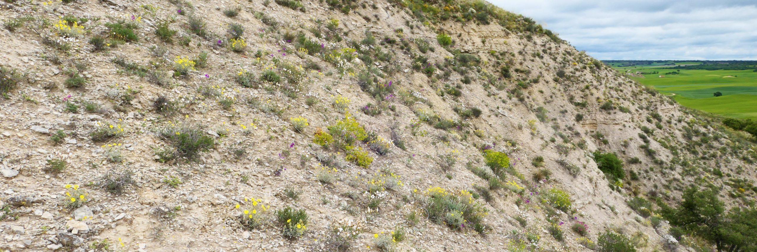 Flora y Habitats